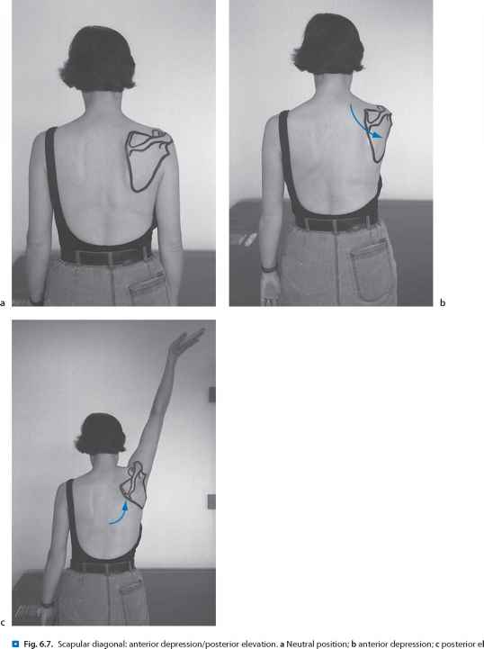 Scapular Protraction With Resistance