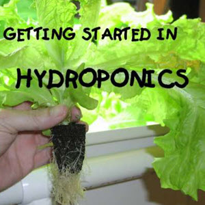 Home Hydroponics For Beginners