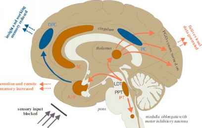 Brainstem Ppt