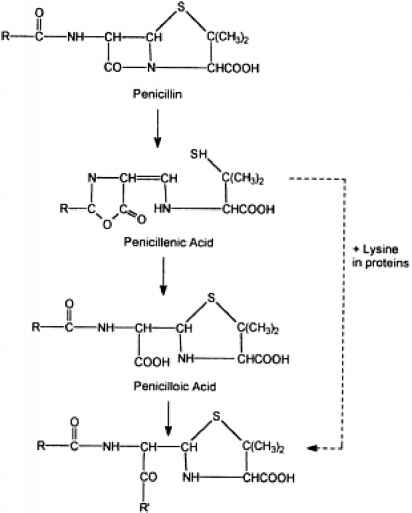 Penicillin Derivatives